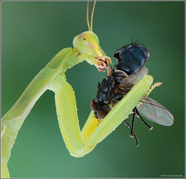 insect_tn